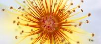 fond_ecran_fleurs_gr - Copie.jpg